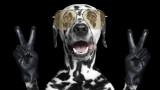 Кучетата и наистина ли могат да броят