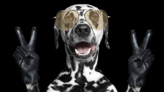 Математическите способности на кучетата