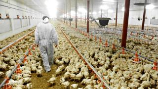 Русия регистрира първи случаи на зараза на хора с птичи грип