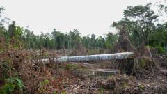 Рязко увеличение на обезлесяването в Амазонската джунгла в Бразилия