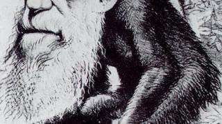 Дарвин откраднал теорията на еволюцията