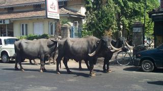 Индия: събуждащият се гигант