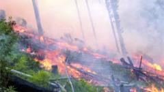 Животни и постройки изгоряха в Пловдивско