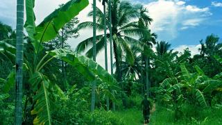 Виетнамци се крили над 40 години в джунглата от американските бомардировки