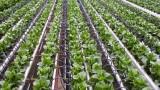 Земеделци се отказват да произвеждат заради ниските цени на вноса