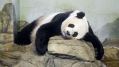Гигантската панда Мей Сян роди
