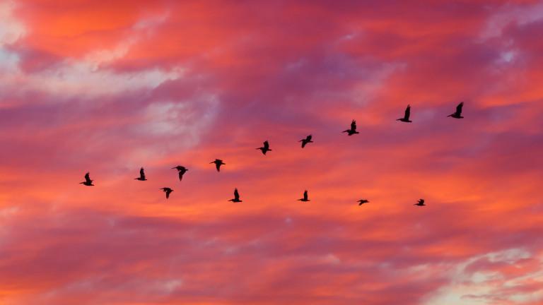 Честваме Европейските дни на птиците