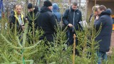 Агенцията по горите проверява какви елхи ни продават за Коледа
