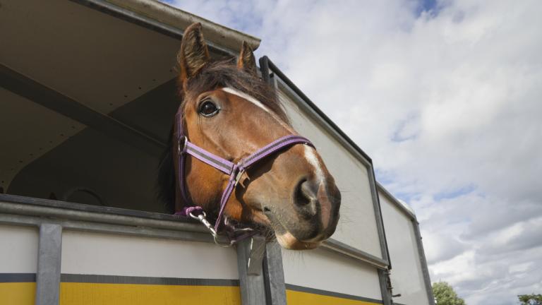 Камион, в който са натоварени пет коня, е бил задържан