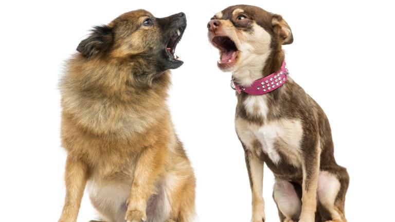 """Как да """"научим"""" кучето си да псува"""