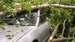 МВР със съвети за безопасност при силен вятър