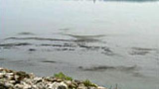 Следят Дунав заради сигнал за замърсяване