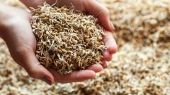 Житните посеви в Добрич под заплаха