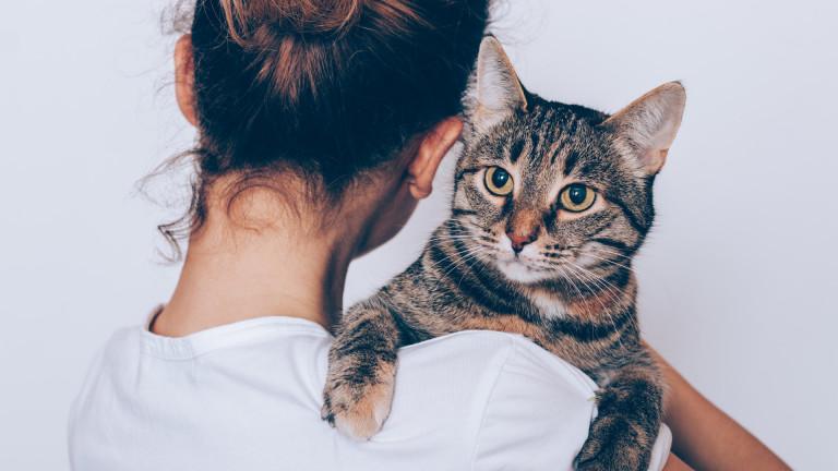 Колко точно ни обичат котките