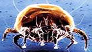 Расте броят на заразените от инфекции, пренасяни от кърлежи