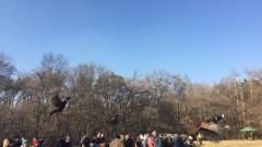 Ученици пуснаха 120 фазана в Борисовата градина