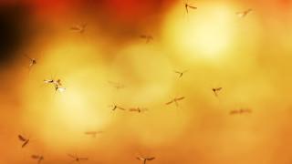 Как ни откриват комарите и можем ли да се скрием от тях