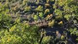 7 нови гнезда очакват своите черни лешояди в Родопите