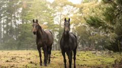 Конфискуваха 6 коня, останали без надзор