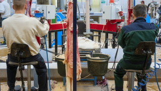 Унгария забрани фермите за норки и лисици
