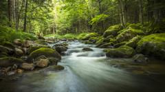 Повече дървета до водните басейни намаляват детската смъртност