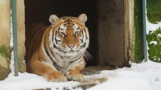 139 животни са родени в Столичния зоопарк през 2018 г.