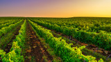 Ренесансът на българското вино