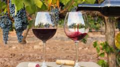 Кои страни изнасят най-много вино в света и къде е България сред тях?