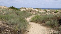 Две министерства запретнаха ръкави по сигнали за разрушени дюни край Камчия