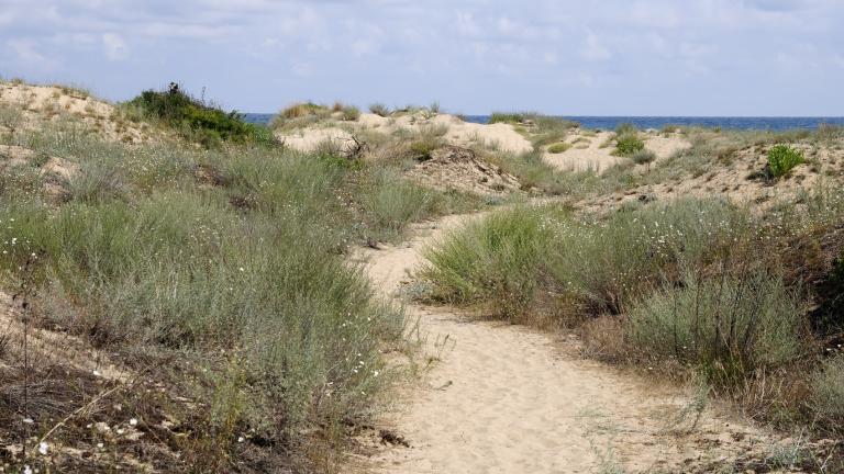 Правителството брани дюните от хавлии и чадъри