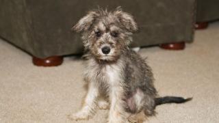 Бездомните кучета в София намаляват