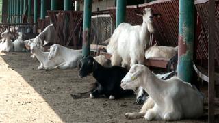 """2011 г. – краен срок за """"европеизацията"""" на фермите ни"""