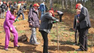 Залесяват 30 дка гора, унищожена от пожар