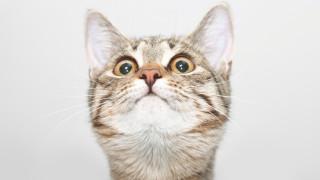 Лудостта на котките