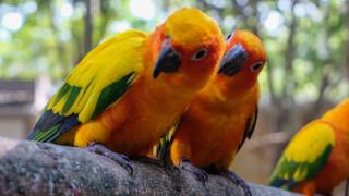 """Мадрид започва """"хуманно избиване"""" на папагали монах"""