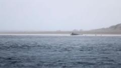 Стотици китове са загинали в Нова Зеландия