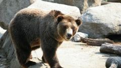 Дете рани мечка във Варненския зоопарк