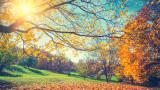 Защо листата на дърветата падат по-бързо