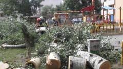 Граждани принудили служители да глобят строител заради изрязано без причина дърво