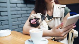 Как да си осиновим куче, докато си пием кафето
