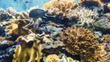 Енергийният проект за $2 милиарда, застрашаващ да унищожи коралов риф на 7000 години