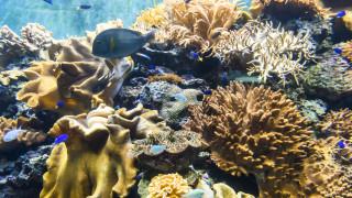 Енергийният проект за $2 милиарда, застрашаващ от унищожаване коралов риф на 7000 години