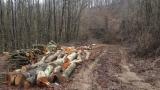 За два дни горски от Варна написаха 7 акта на бракониери на дървесина