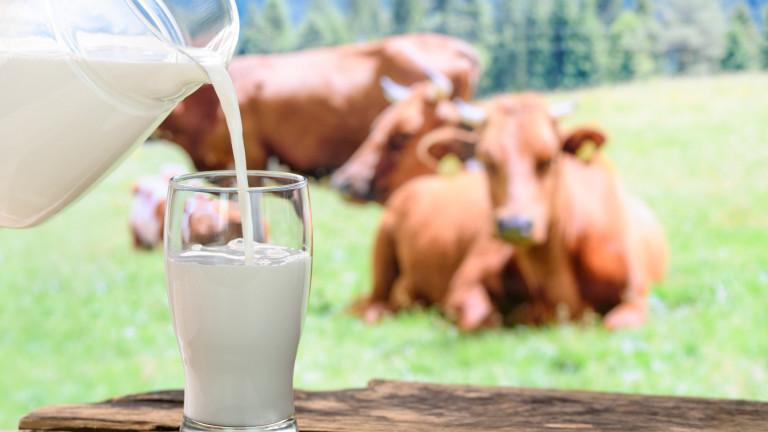 Защо трябва да избягваме пълномасленото мляко