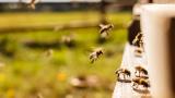 Протестиращи пчелари се обявиха против пестицидите