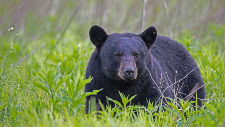 Патрулка катастрофира в Калифорния заради паднала отгоре й мечка