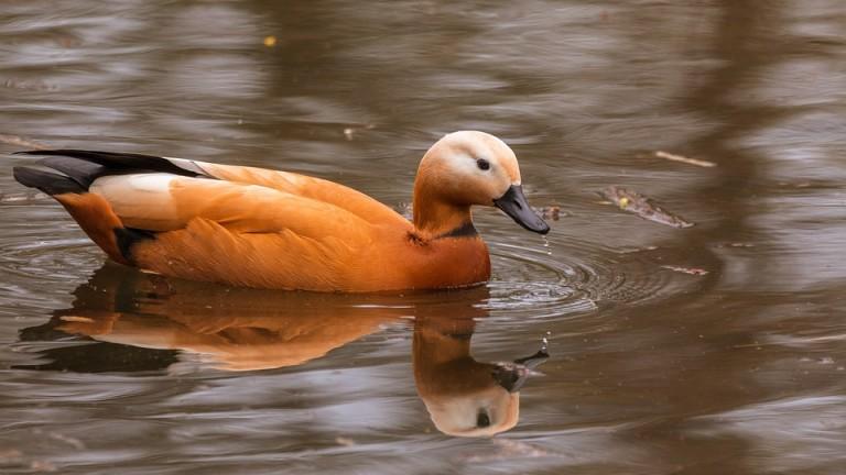 Освободиха 20 птици от защитен вид край Тутракан