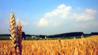 Изнесли сме рекордните 3,8 млн. тона пшеница от началото на годината