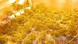 Поредна домашна наркооранжерия откриха в Пазарджишко