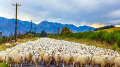 В Уелс зоват Джонсън да спре да играе на руска рулетка с овцевъдството